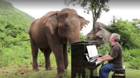 英国男子日复一日为大象弹钢琴,大象用一个动作表达谢意,太暖心