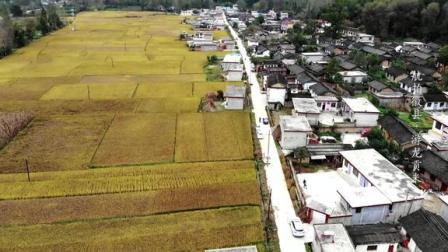 航拍甘肃徽县水稻,十月的稻田一片金黄,高空俯瞰太美了!