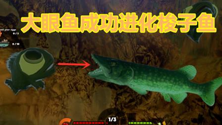 海底大猎杀:大眼鱼偷吃巨型鱼的肉,长大成功进化梭子鱼