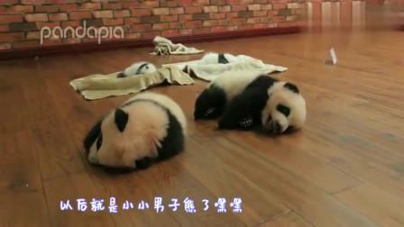 熊猫:刚长出牙齿的小芝麻,找不到其他熊展示就只好凶奶妈