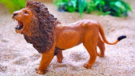 找到并认识小动物模型玩具