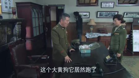 与狼共舞:海棠依旧怀疑少杰,周处却开始收拾东西准备逃跑?
