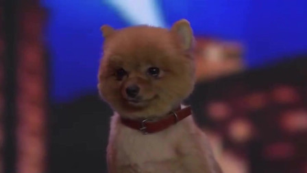 中国达人秀这只小狗狗是怎么肥事居然现场打盹