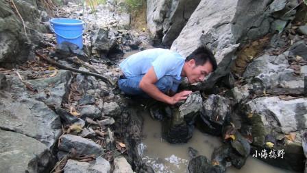 石头缝多的地方特别藏鱼小海舀干水后鱼就自己跑出来了