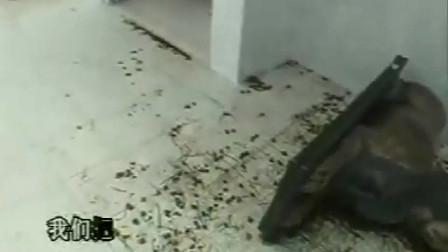 珍贵影像:张子强看到运送炸药的马仔后,怒火中烧,被干警压住