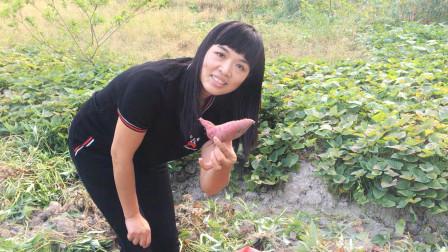广东打工姑娘回老家,农村种了8亩红薯地,挖的真过瘾!