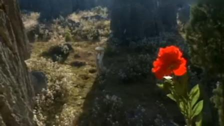 聊斋:公子在悬崖上发现牡丹王,没想到一眨眼回到了自己的花园里!