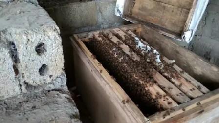 蜜蜂快速度繁殖最快方法之一,养蜂者建设收藏