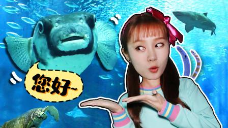 鲨鱼出现了!探访福冈MarineWorld水族馆遇见海洋动物的基尼