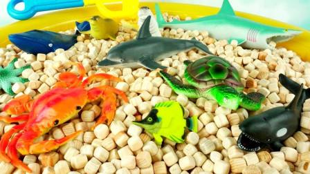 寻找认识海洋小动物玩具模型