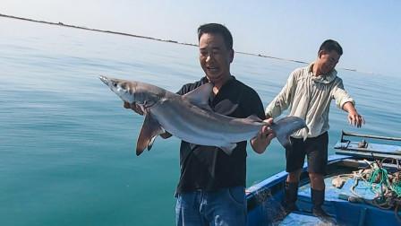 玉平首次放网发财了,遇上十来斤的大鲨鱼撞破渔网,活的都不敢抓