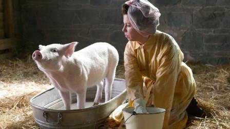 小猪害怕自己被做成熏肉,努力学习技能,活成主人舍不得杀的样子!