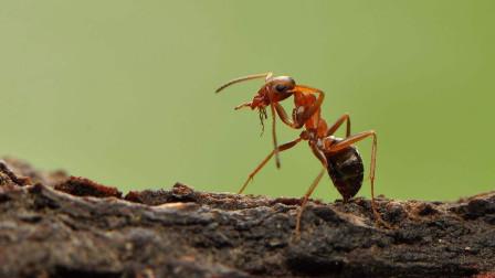 十二星座变身成蚂蚁,你觉得谁最帅?