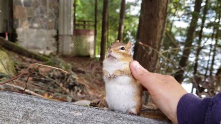 森林生活的网友和一只花栗鼠成了朋友,默契相处的日常,太温馨了