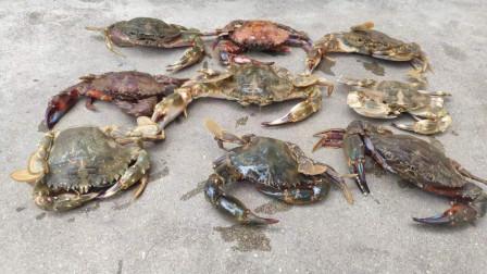 大妈赶海实力强,小马找来帮手助阵,捡了半桶大螃蟹