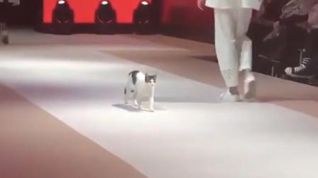 小猫误闯时装展,实在看不下去后,亲自教模特们走正宗猫步!