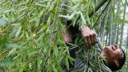 70岁的老人竟能飞越竹海,简直是青翼蝠王在世,害怕技术试穿