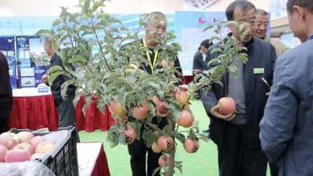 在家就可摘果子吃!大叔用花盆种出大红苹果,在北方也能越冬