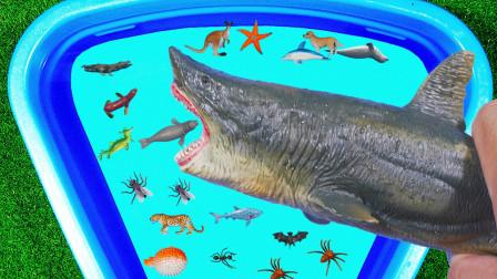 认识动物 瓢虫乌贼蜜蜂鲨鱼