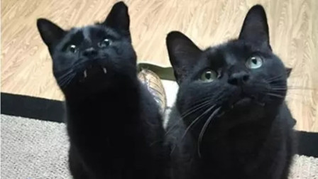 """女子在网上买了两只""""黑猫"""",养了一年之后,觉得越来越不对劲!"""
