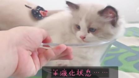最强变身!宠物猫从固态变成液态,仅需5秒钟,奥特曼也得服!