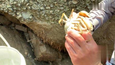 小伙到无人荒岛上赶海抽水坑,巨钳大货抓完一只又一只,太过瘾了!
