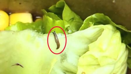 珠海一女子蔬菜沙拉外卖吃出鼻涕虫:还在蠕动