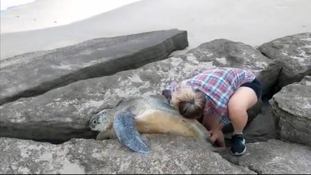 海龟被卡在岩石缝里,女子勇救后,给了它生的契机!