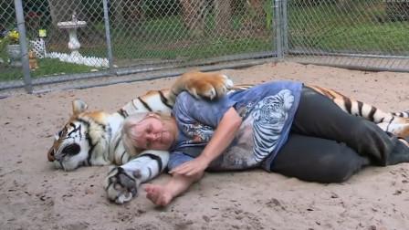 老虎睡觉时抱着饲养员,结果睡醒之后立马翻脸,镜头记录下全过程