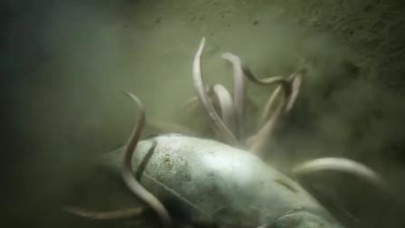 实拍鱼的身体是如何被掏空的,感觉有点像恐怖片