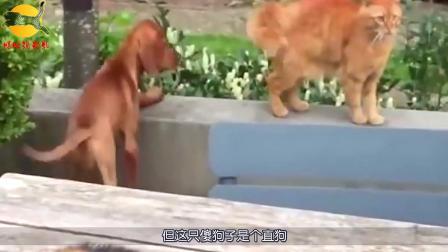猫咪看到自家狗被打,气势汹汹的立马去干架,网友,太搞笑了