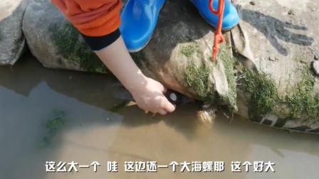 渔妹捡贝壳发现池底泛红,原来是条值钱的石斑!真是意外收获