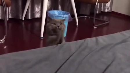 猫:铲屎的,求求你把媳妇还给我