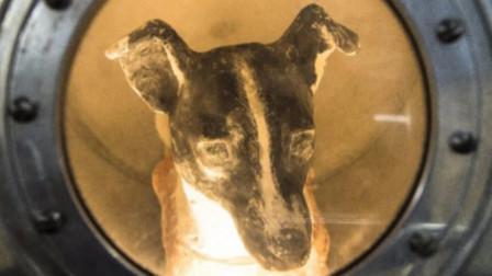 最孤独的流浪狗,为人类探索太空,至今还在宇宙中漂浮