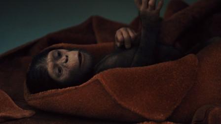 猩球崛起:猩猩突发狂,大闹实验室,得知原因竟是因为有宝宝了