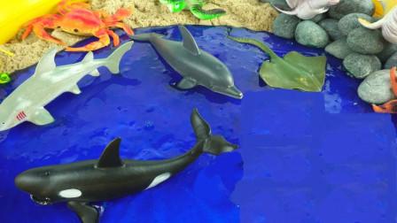 使用零件组装海洋小动物玩具