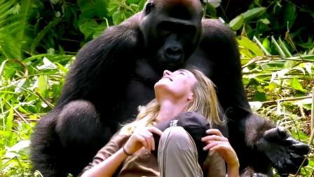 同属人科,人和大猩猩能身下孩子吗?科学家对这个假设给出结论