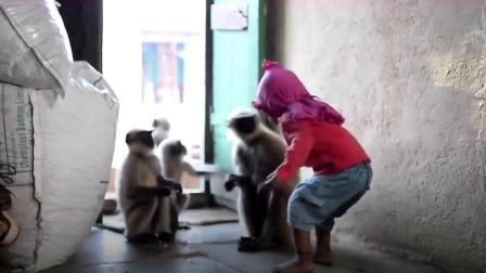 """印度5岁男孩""""猴语八级"""",猴子天天找他玩,这让人难以置信!"""