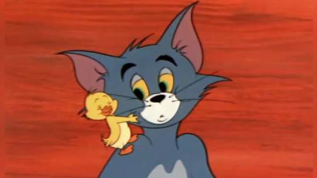 猫和老鼠:一只白色的小鸭蛋,滚到汤姆身下,小鸭子破壳而出