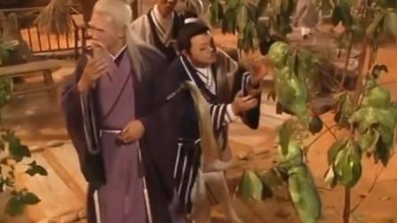 """这就是传说中的""""人参果"""",一个起码重三四斤"""