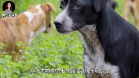 """人们喜欢""""摸狗头"""",但你清楚,在狗狗心里这意味着什么"""