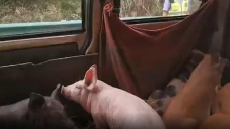"""贵州一辆面包车上拉的这些""""乘客"""",把交警蜀黍吓一大跳"""
