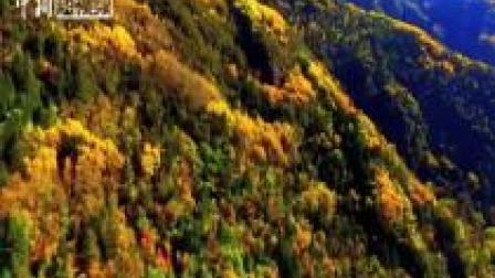 金秋十月 看四川阿坝州黑水县缤纷彩林