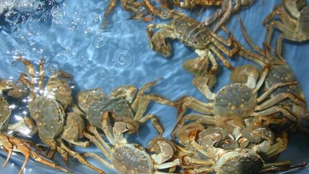 螃蟹报价大跳水,养殖户的损失该找谁?网友:都是蟹农自己作的