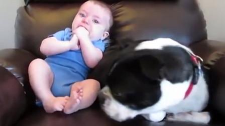 萌娃忍不住放了个屁,在一旁的狗狗闻到后,下一秒的举动令人笑翻
