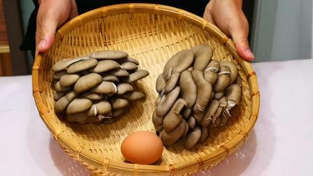 蘑菇最好吃做法,不用炒不做汤,越嚼越香,一大盘不够吃,太香了