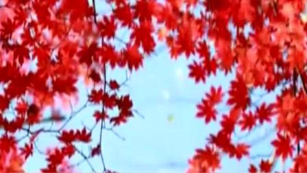 吉林仙峰国家森林公园 ,枫叶似火层林尽染