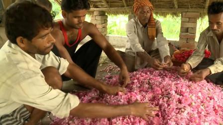 印度香水是怎么做的?老大爷从摘花做起,10斤花做一瓶香