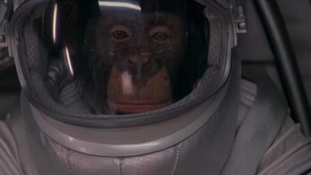决战猩球:猩猩居然完全听得懂人类的话,并且按照指示去做,不可思议!
