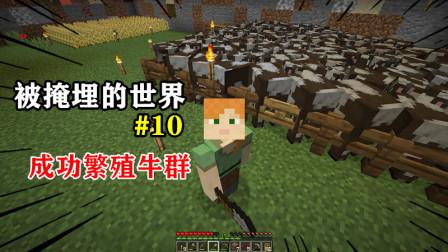 我的世界被掩埋的世界10:成功繁殖牛群,大面积改造生存空间!